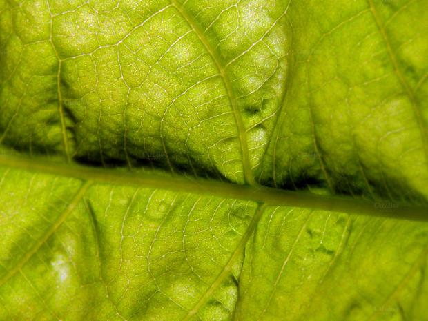 Foilage Leaf Texture