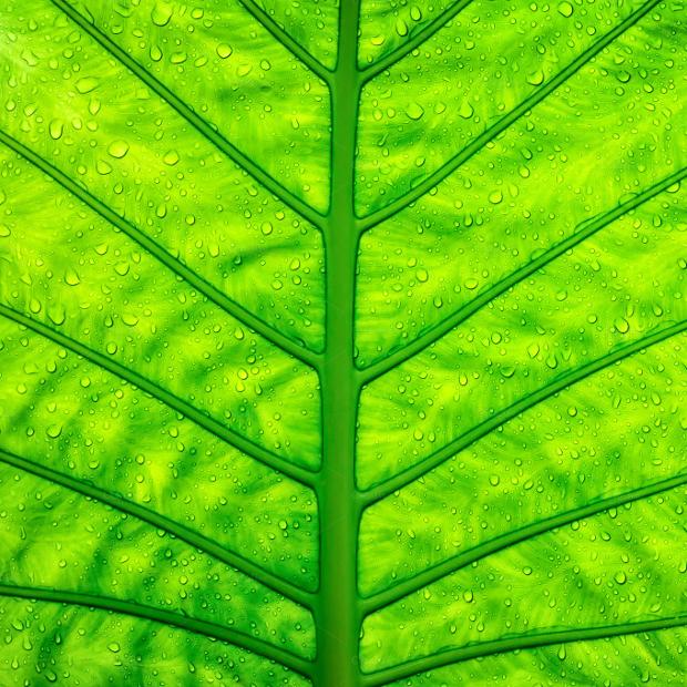 Closeup Look of Green Leaf Texture