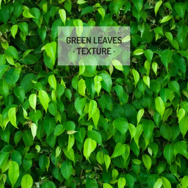 free green leaves texture