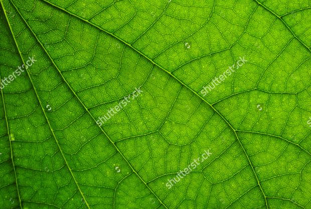 High Resolution Leaf Texture