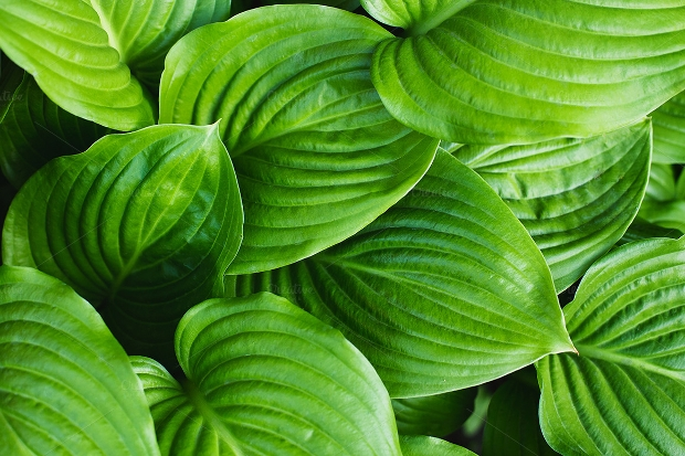 realistic green leaves texture
