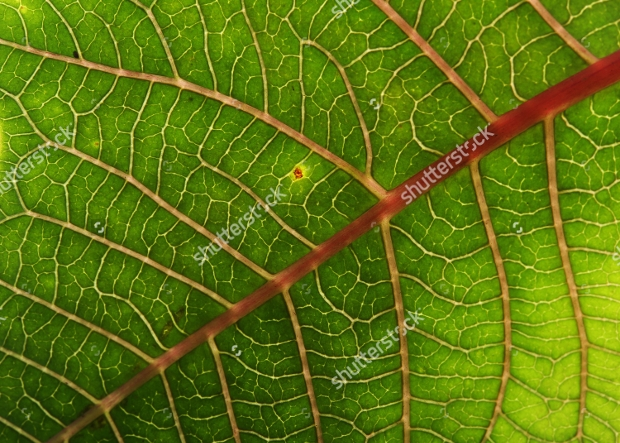 High Quality Green Leaf Texture