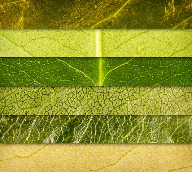 Eco Green Leaves Texture Pack