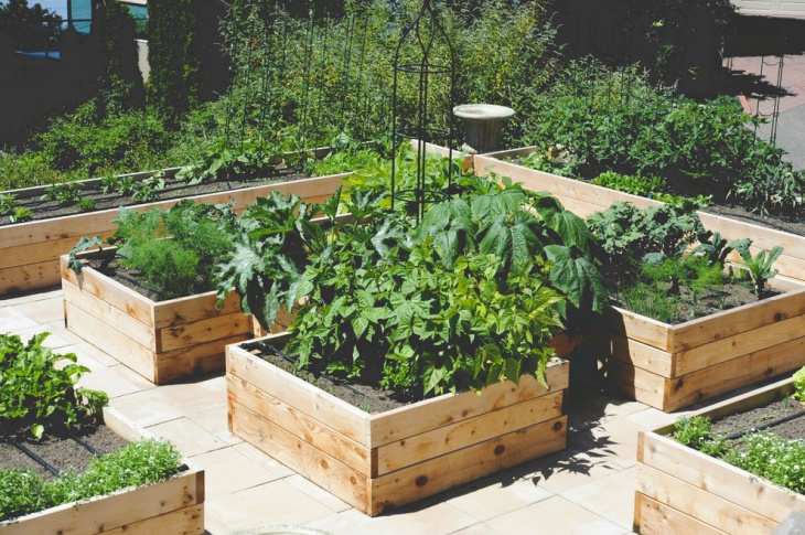 rooftop kitchen garden