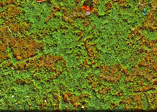 Ideal Seamless Moss Texture