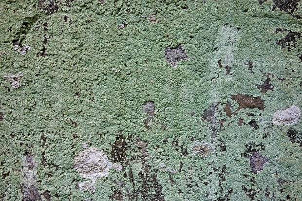 weathered Moss Texture