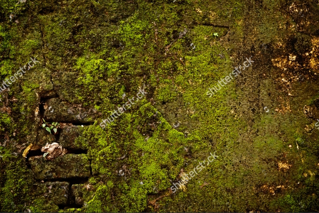 stone wall with moss texture idea