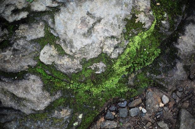 moss on rock texture