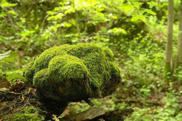 Dark Green Moss Texture