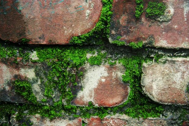 Brick Moss Texture