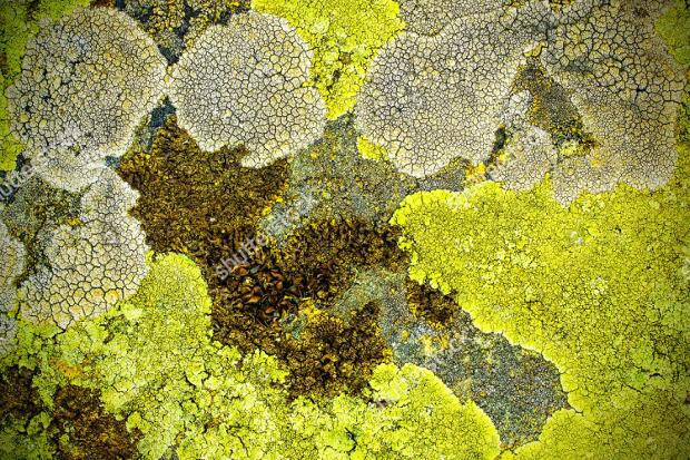 dried moss texture