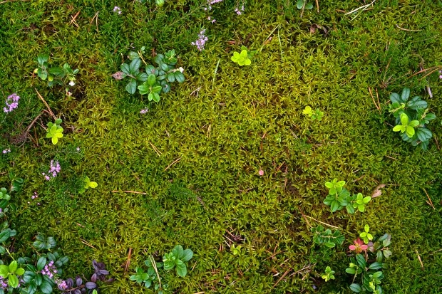 ground plant moss texture