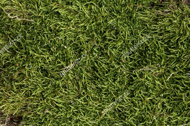 High Quality Green Moss Texture
