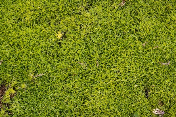 moss nature ground texture