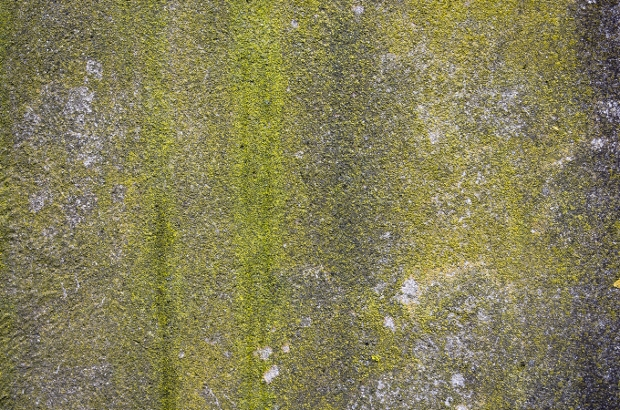 mossy concrete background texture