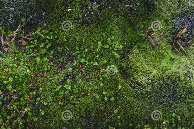 colorful moss texture