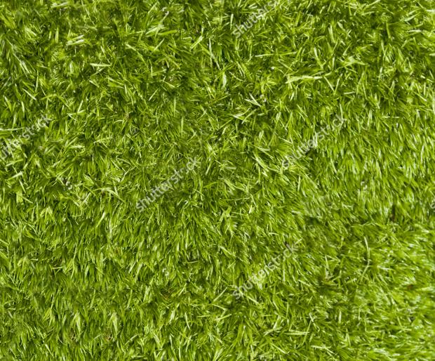 Fresh Green Moss Texture