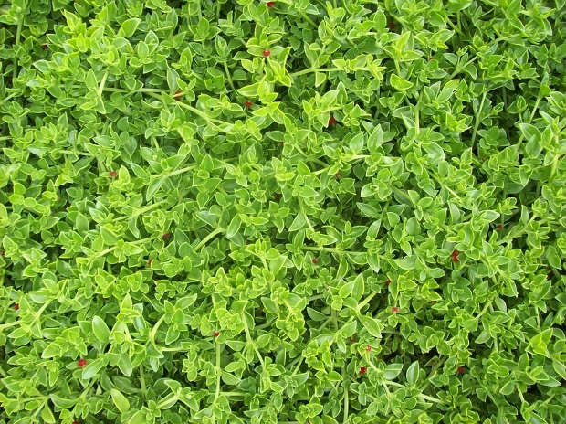 Green Organic Texture