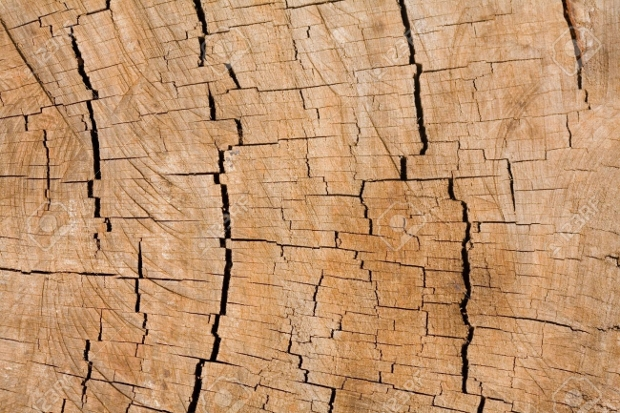 Tree Ring Organic Background Texture