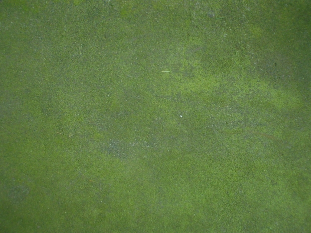 Green Mossy Stone Texture