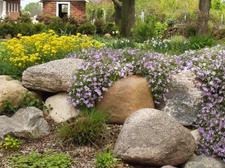 tulip flower perennial garden