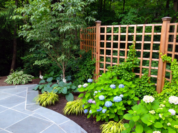 Japanese Hydrangea Garden