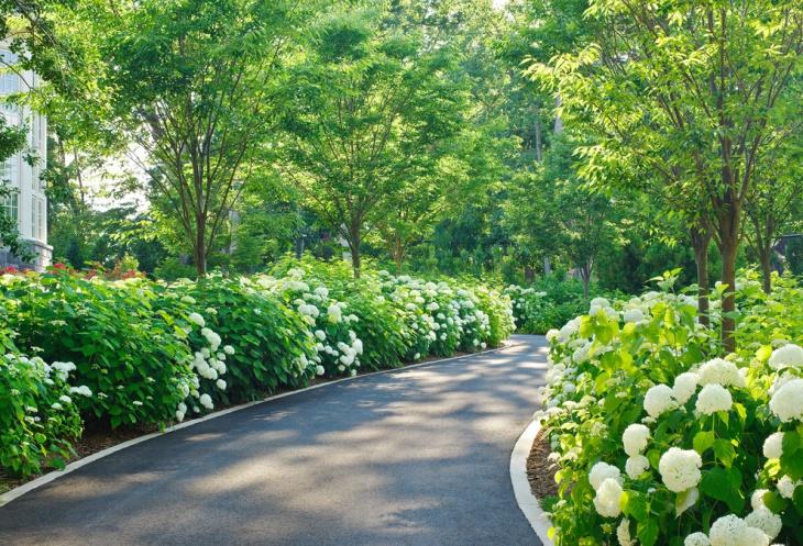 Shade Hydrangea Garden