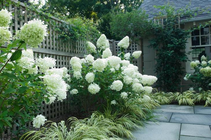 20 hydrangea garden designs ideas design trends for Westover landscape design