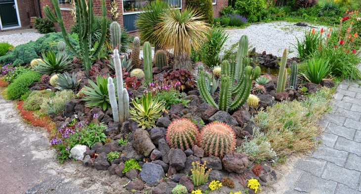 Lovely Cactus Rock Garden Designs