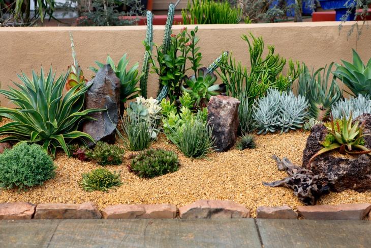 frontyard succulent garden ideas