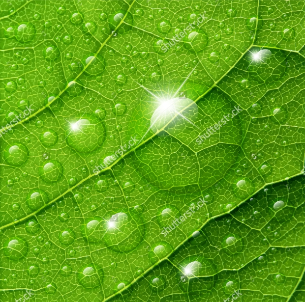 Water Drop Vector on Green Leaf