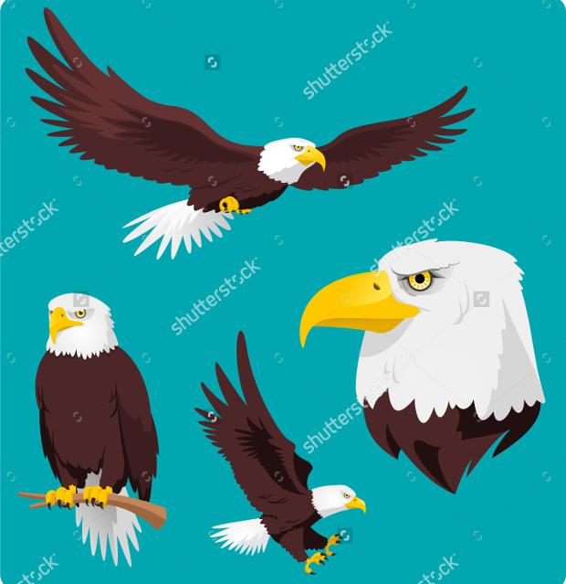 black eagle vectors