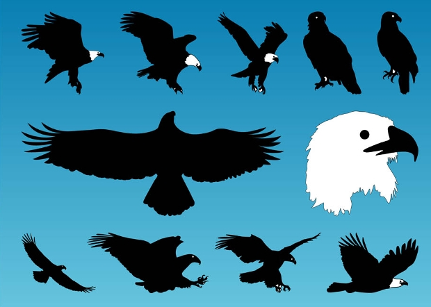 free eagle bird vectors