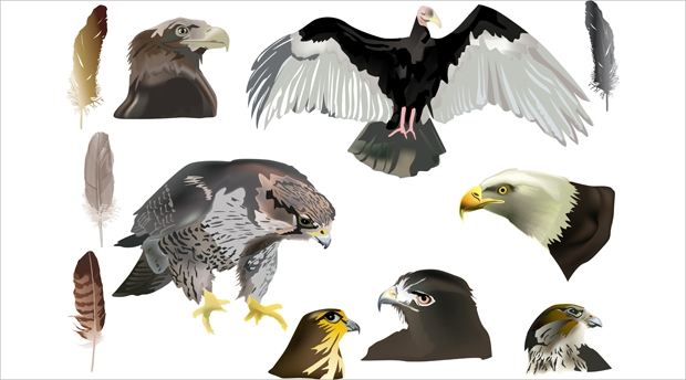 Eagle with Head Drawn Vector