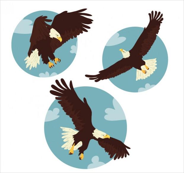 nature bird eagle vector