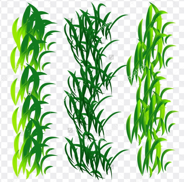 spring young grass vector set