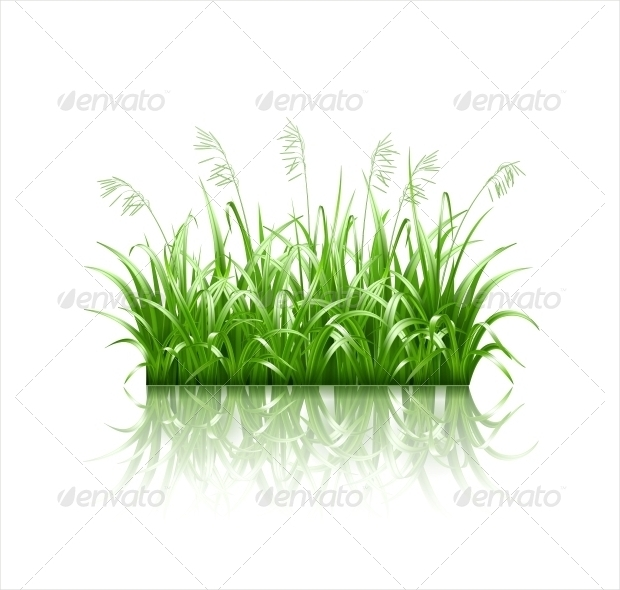 fresh grass vector design