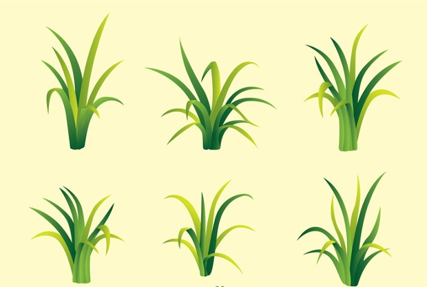 fragment of green grass vector