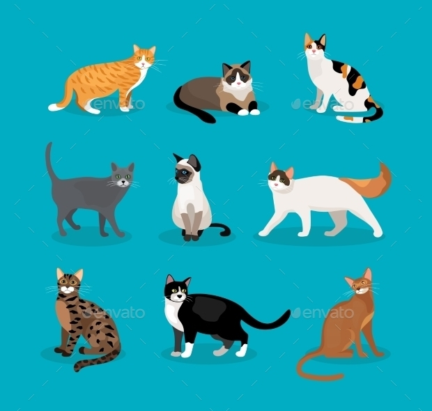 set of cat vectors