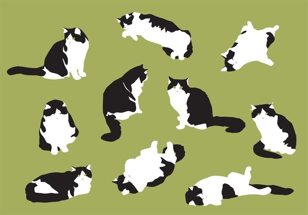 fat cats vector ilustration
