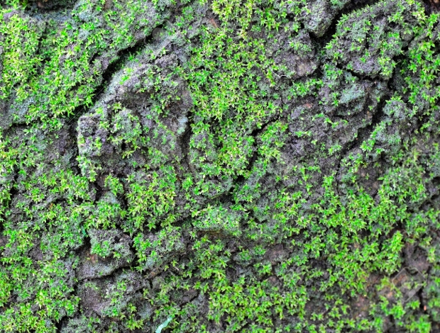 Green Mossy Rock with Surface Pattern