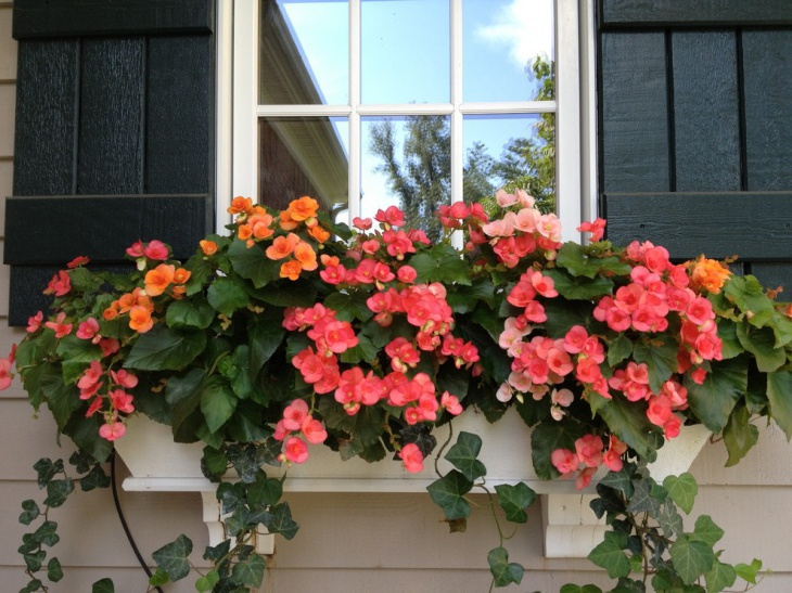 Window Peony Garden