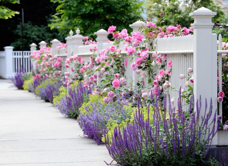 Shrub Rose Garden Idea