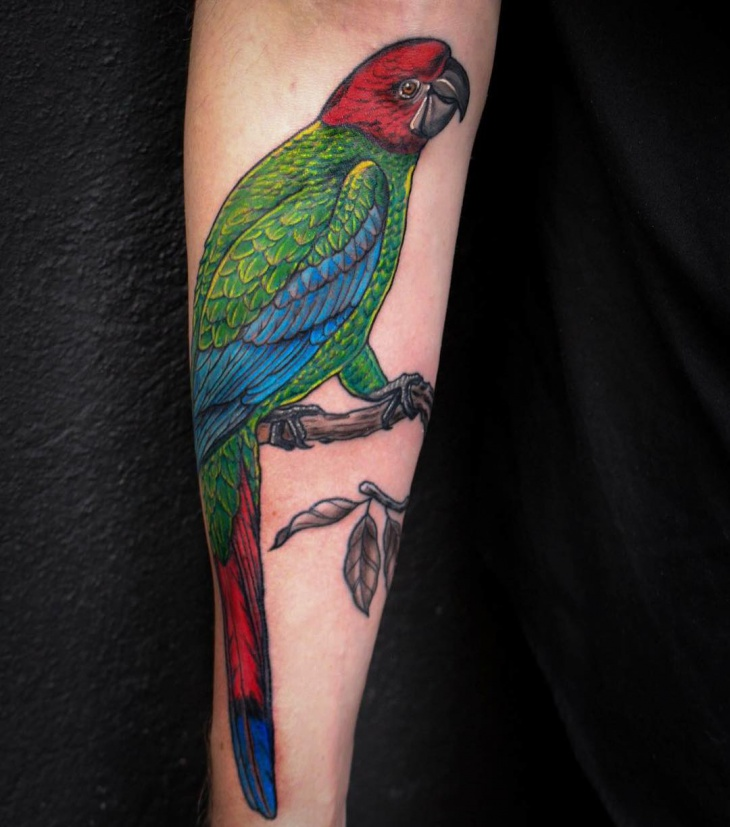 colorful parrot tattoo design
