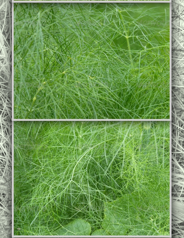green fennel plant textures