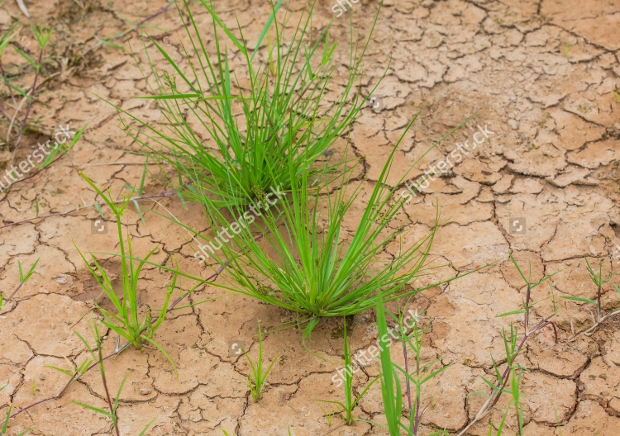 plant crack texture design