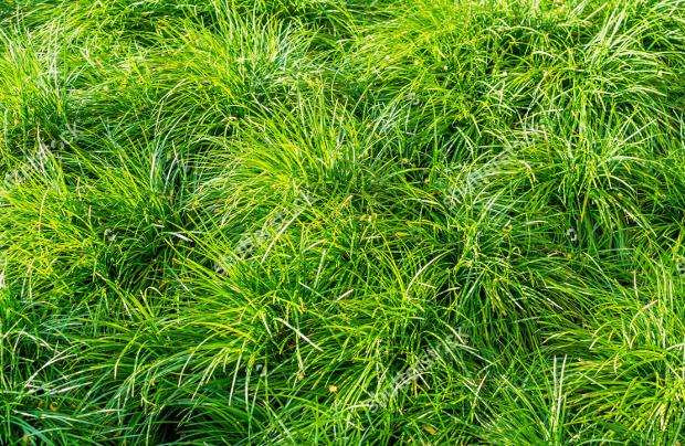 Plant Bush Texture Design