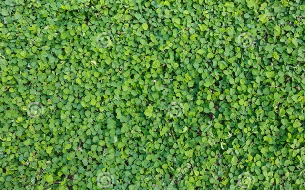 Green Plant Leaves Texture