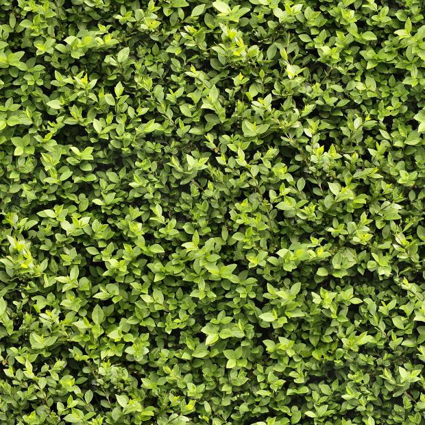 Hedge Plant Textures