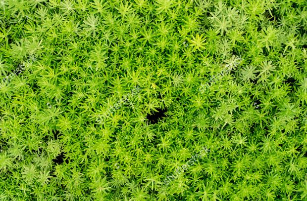 Fresh Plant Texture